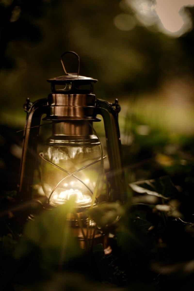 vintage lantern in forest