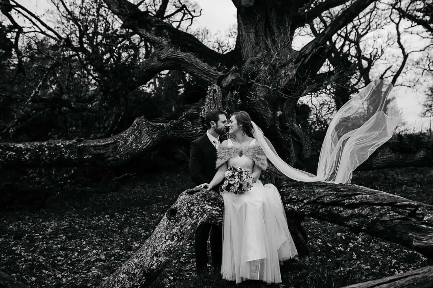 bride and groom at large oak tree in ireland