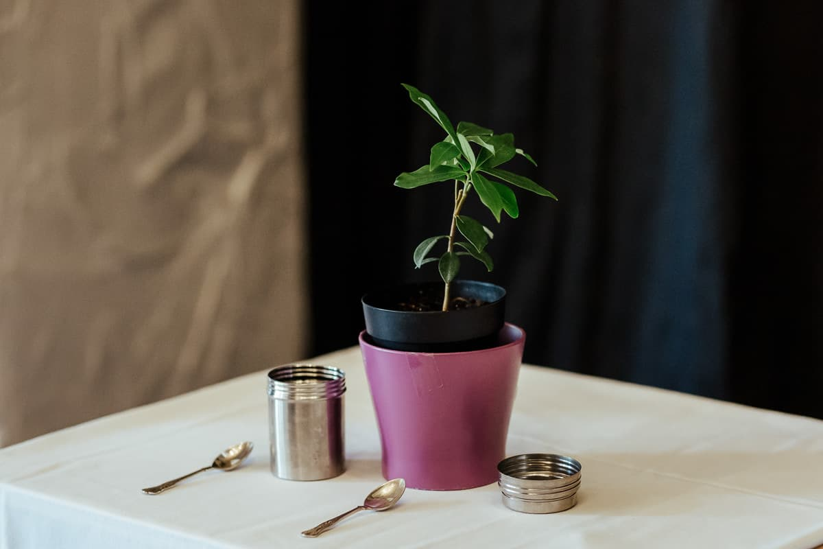 tree planting wedding ceremony civil wedding ceremony ideas